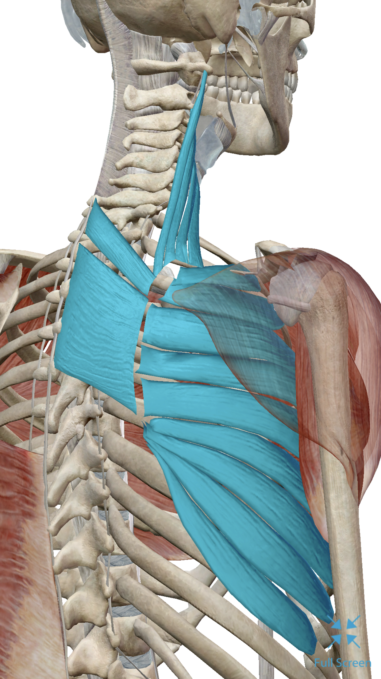 Three Reasons Your Upper Back And Neck Maybe Hurting Maple Grove
